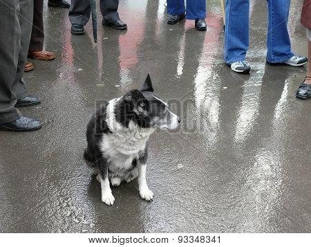 Dog Among The Crowd