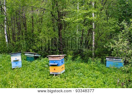 Forest Apiary