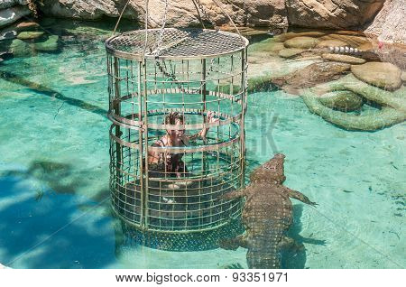 Cage Diving With African Crocodile