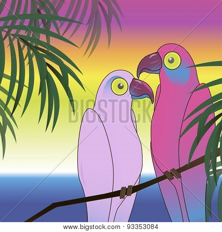 Two colourful parrot bird background