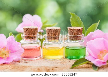 Bottles Of Essential Oil And Pink Wild Rose Flowers Closeup.