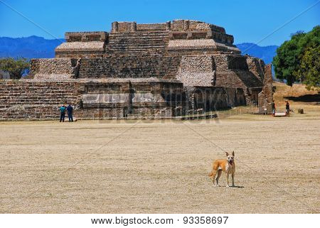 Dog At Monte Alban Ruins In Oaxaca, Mexico
