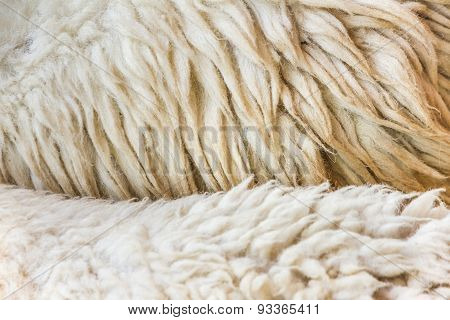 The Texture Design With Fleece