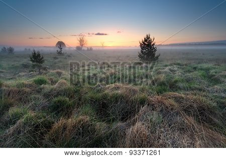 Misty Sunrise Over Wild Meadow