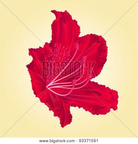 Rododenrodon  Red Flower Vector