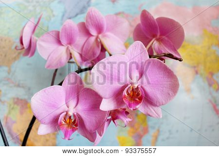 Orchid In Geography Class