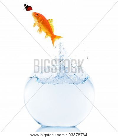 goldfish jumping trying to catch butterfly