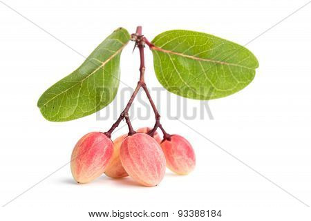 Carissa Carandas L. Tropical Fruit Isolated On White Background