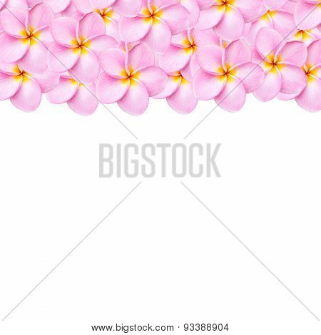 Pattern Pink Frangipani Flower Texture For Background
