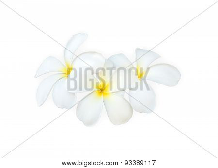 Close Up White And Yellow Frangipani Flower Isolated On White