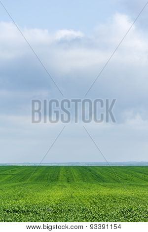 Green Field With Wheat Grass Against The Sky