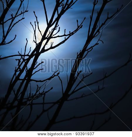 Full Moon In Foggy Dark Night Naked Leafless Trees Silhouettes And Clouds Halloween Theme Background