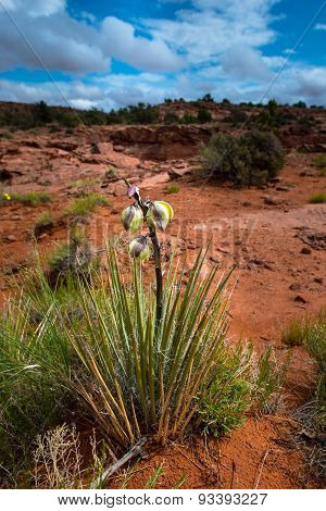 Yucca Plant Blossom Escalante National Park Utah Landscape