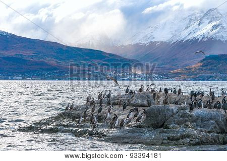 Sea lion and King Cormorant colony in the Beagle Channel