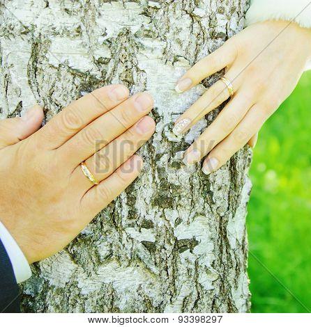 Hands Of Groom And Bride
