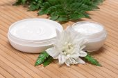 picture of fern  - Organic moisturizing skin care products - JPG