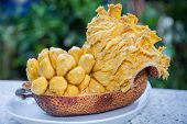 picture of south east asia  - Group of fresh chempedak arils a fruit native to South East Asia region - JPG