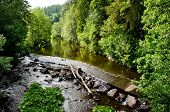 picture of butterbur  - calm river in the forest plashes over a weir - JPG