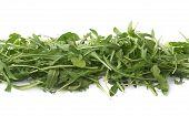 stock photo of rocket salad  - Eruca sativa rucola arugula fresh green rocket salad leaves lined up in a row - JPG