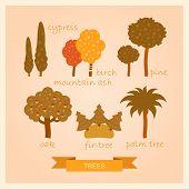 image of ash-tree  - vector set of cartoon illustrations of trees - JPG