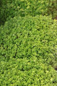 pic of fern  - fern green with the nature  - JPG