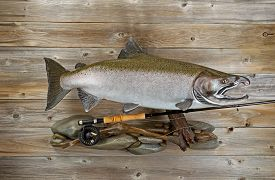 pic of fly rod  - Large salmon with fly rod and reel on rocks and rustic wood - JPG