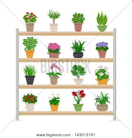 Houseplants and bright flowers in blossom on shelves composition flat vector illustration