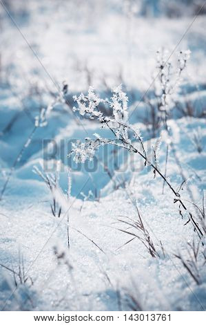frozen branches under snow in winter  background