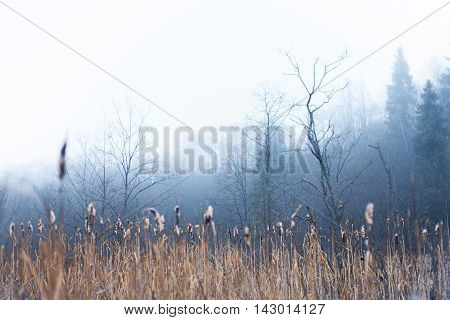 Winter fen-grass and fog in a wetland area