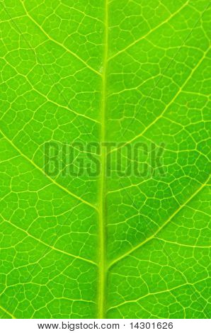 Very extreme close up of green leave