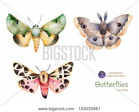 Set of 3 high quality hand painted watercolor Butterflies and moths.