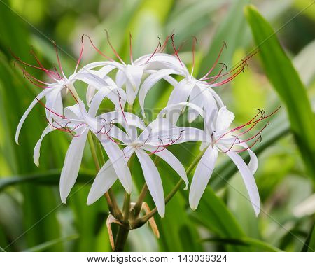 A big flowering plant with white pedals
