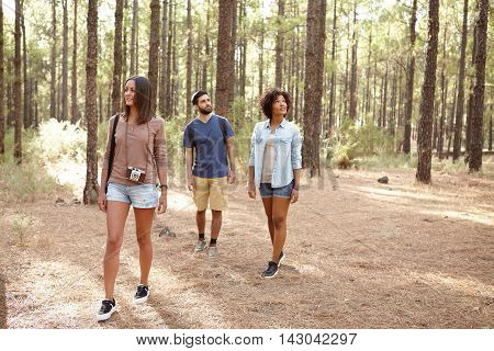 Three Friends In A Pine Plantation