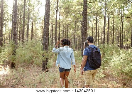 Happily relaxed friends walking in a pine tree plantation in the late afternoon sunshine while wearing casual clothing