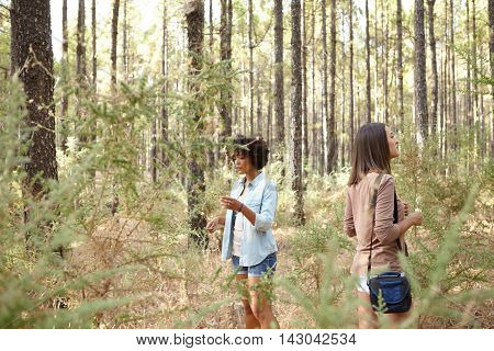 Two girlfriends exploring a pine tree forest in the late afternoon sunshine while touching the young saplings wearing casual clothing