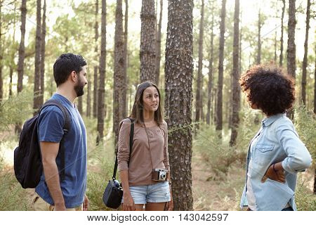 Group Discussion In The Pine Forest