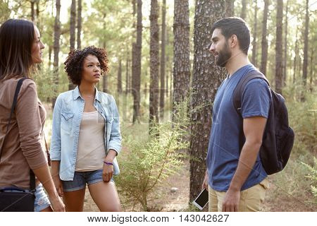 Friends Chatting In A Pine Forest