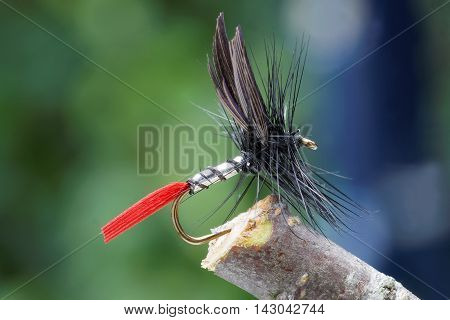 Macro shot of a dry fly fishing fly silver body black wings red tail and leafs in background out of focus