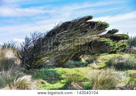 Twisted Trees Near Slope Point, New Zealand