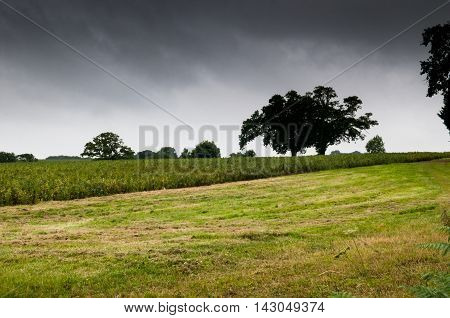Dramatic sky over field with solitary tree. Moody and atmospheric tone. Concept for loneliness.