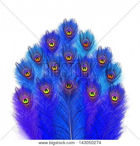 Peacock feathers. Peacock. Blue