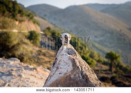 Skull of wild animal on a top of small pyramide with mountains on a background
