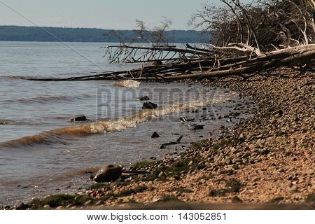 Fallen trees laying on the shore and into the water.