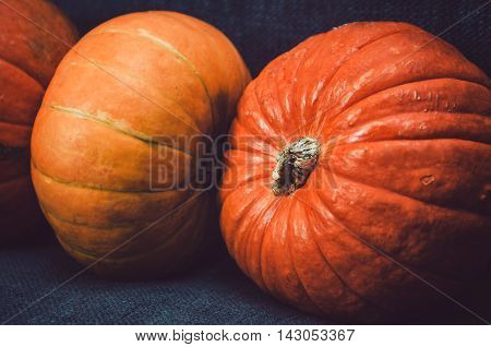 Assortment of group orange vegetables pumpkins on dark background. Fall wallpaper, autumn concept. Picture for your design food blog photo.
