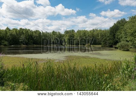 A quiet peaceful pond surrounded by trees under a blue sky with white puffy clouds