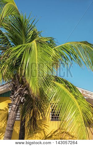 Beautiful yellow house and palmtree in the bahamas