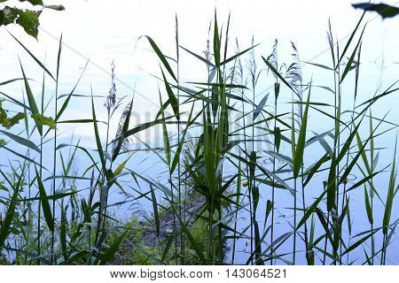 Grass near the water, water surface, mere