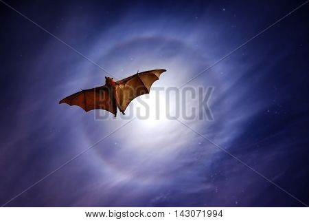 Halloween night with bat flying at sunset