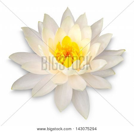 Yellow Lotus Flower Isolated On White With Clipping Path