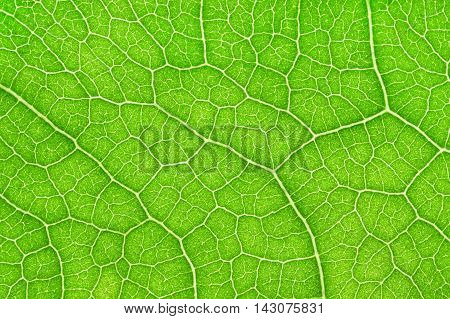 Close-up and detail of green leaf background